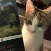 Summer (Quaker cats)